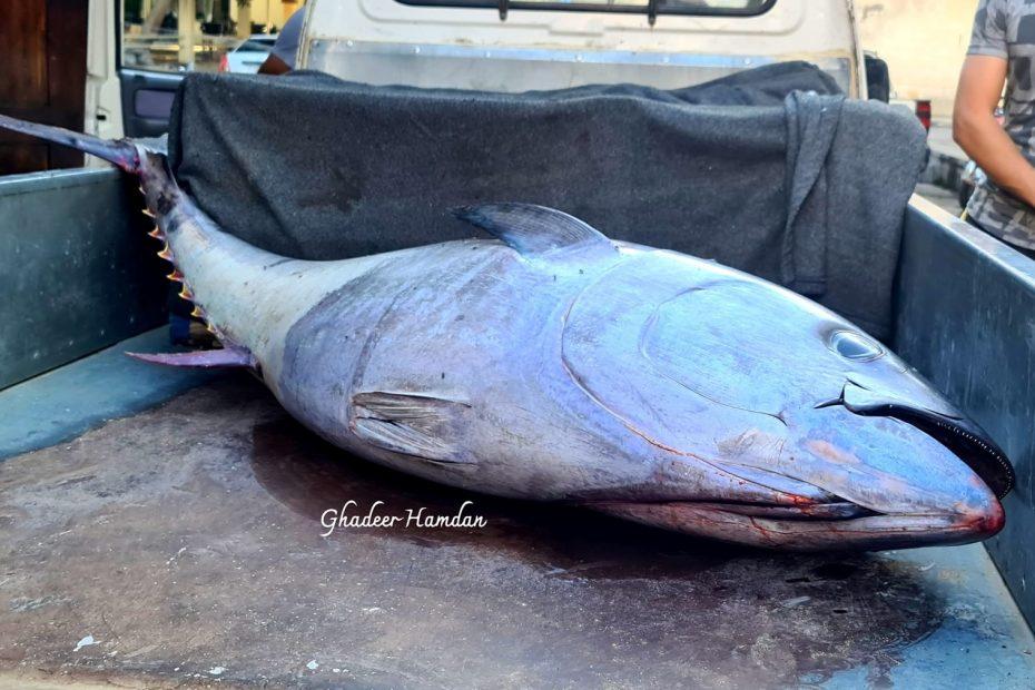 العثور على سمكة نادرة وغامـ.ـضة في مدينة سوريا والسلطات تتحـ.ـرك للتحقق منها (صور)